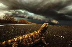 Storm-Chasing Photographers