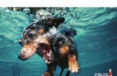 74 Distressed Dog Finds