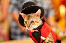 Kitty Costume Catwalks (UPDATE)