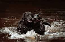 Companion Pet Photography