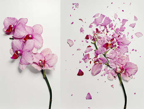 Broken Flowers Photograph