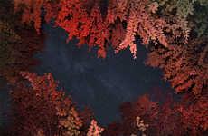 Foliage Framed Photography