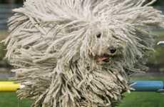 Extreme Dog Photography
