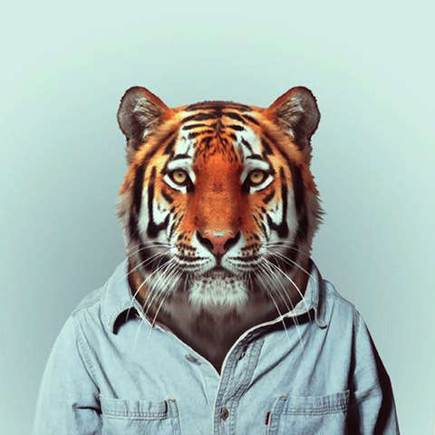 Animals Modeling Human Clothes