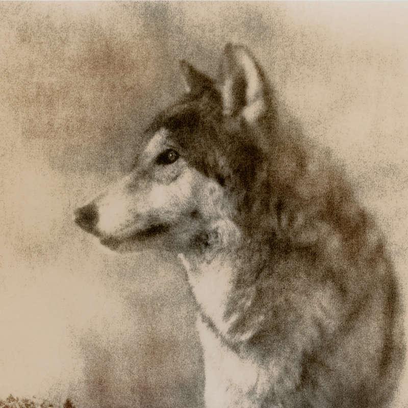 Large Scale Analog Photographs of Animals