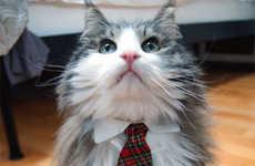 Formal Feline Accessories