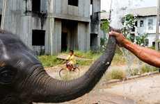 Setimental Urban Elephant Photography