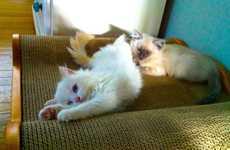 16 Examples of Cozy Feline Furniture