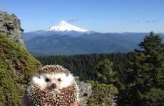 Adventurous Hedgehog Photography