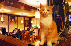 Cozy Cat Pubs