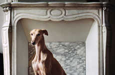 Rescued Greyhound Photography