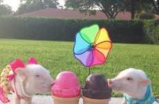 Stylish Teacup Pigs