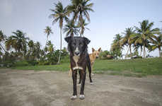 Abandoned Dog Photography