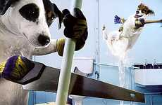 Humanizing Dogs