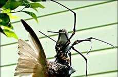 Bird-Eating Spiders