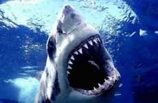 Viral Sea Predator Movies