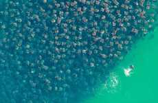 Devil Ray Swarms